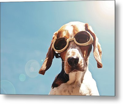 Dog In Goggles With Sun Flare Metal Print by Darren Boucher
