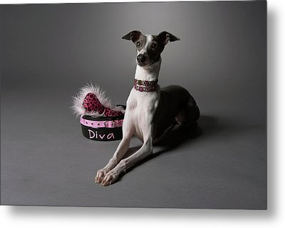Dog In Sitting Position With Diva Bowl Metal Print by Chris Amaral