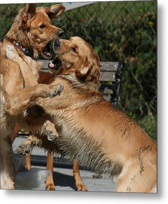 Dog Playground Metal Print by Valia Bradshaw