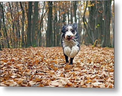 Dog Running In Forest Metal Print by Regarder tout autour de soi