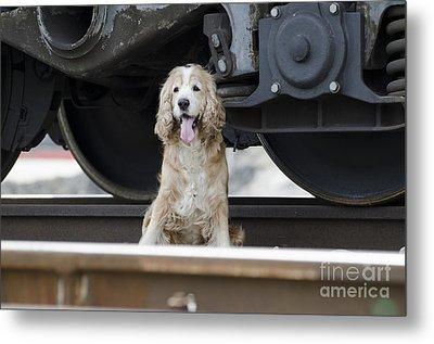 Dog Under A Train Wagon Metal Print