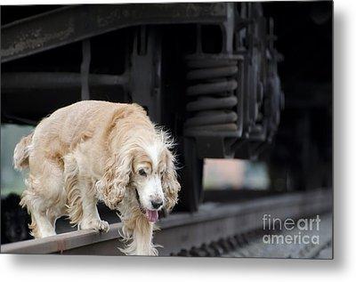 Dog Walking Under A Train Wagon Metal Print