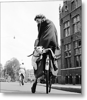 Doggy Bag Metal Print by Harry Kerr