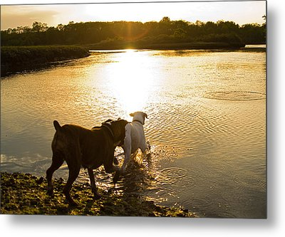 Dogs At Sunset Metal Print by Stephanie McDowell