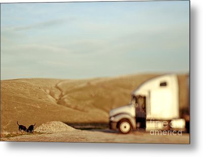 Dogs Sniffing The Ground In Countryside Metal Print
