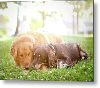 Dogs Snuggling Outside Being Cute Metal Print