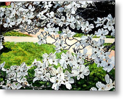Dogwood Blooms In A Virginia Church Yard Metal Print by Thomas Akers