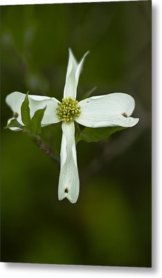 Dogwood Cross Metal Print