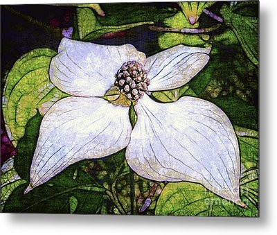 Dogwood Days Metal Print by Judi Bagwell
