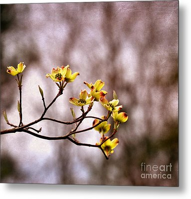 Metal Print featuring the photograph Dogwood by Tamera James