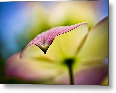 Dogwood Metal Print by Toni Johnson