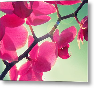 Dolce Metal Print by Amy Tyler