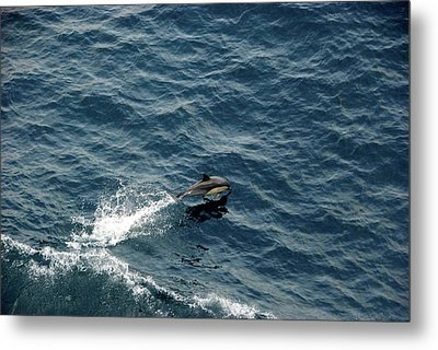 Dolphin Dive  Metal Print