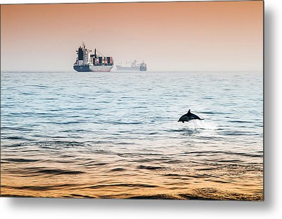 Dolphing Playing In The Sunset Metal Print by Stephen McCluskey