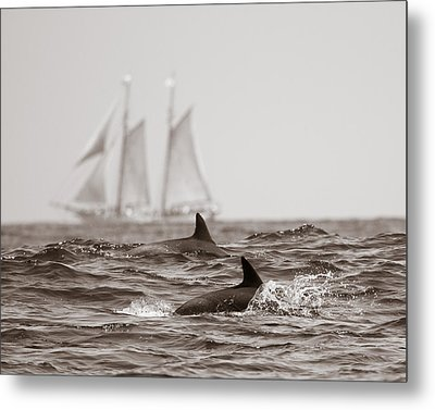 Dolphins With Ship Metal Print by Will Edwards