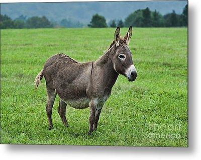 Donkey Metal Print by John Greim