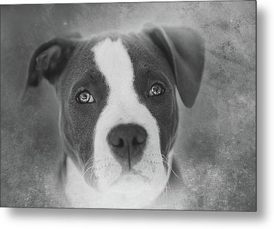 Don't Hate The Breed - Black And White Metal Print by Larry Marshall