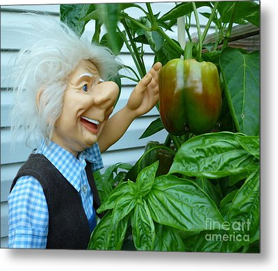 Metal Print featuring the photograph Dorf Grandpa Doll Picking Bell Peppers by Renee Trenholm