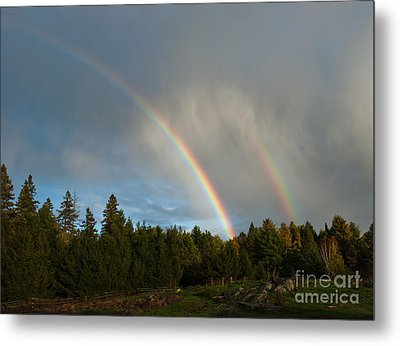 Double Blessing Metal Print by Cheryl Baxter