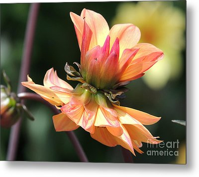 Metal Print featuring the photograph Double Floral by Eve Spring