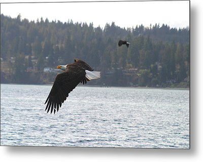 Double Trouble Eagles Metal Print by Kym Backland