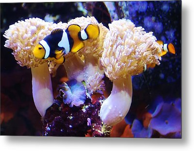 Down Under Metal Print by Bruce Bley