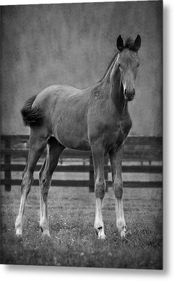 Metal Print featuring the photograph Drago by Sami Martin