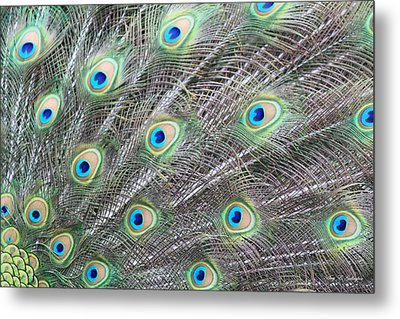 Metal Print featuring the photograph Dragon Eyes by Amy Gallagher