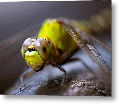 Dragon-fly  Metal Print by Anna Rumiantseva