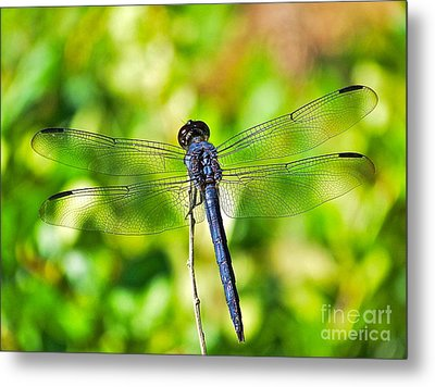 Metal Print featuring the photograph Dragon Fly Spread by Eve Spring