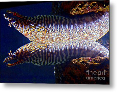 Dragon Moray Eels Metal Print by Pravine Chester