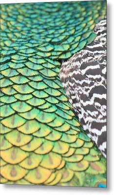 Dragon Scales Metal Print by Amy Gallagher