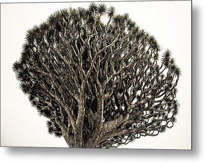 Dragon Tree Metal Print by Justin Albrecht