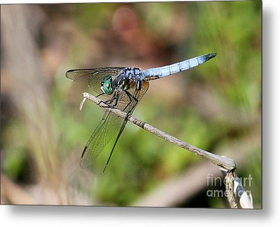Dragonfly 2 Metal Print by Erica Hanel