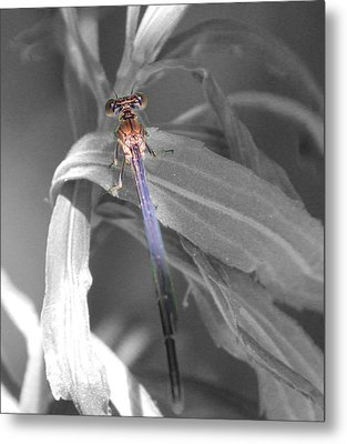 Dragonfly Bw With Color Metal Print