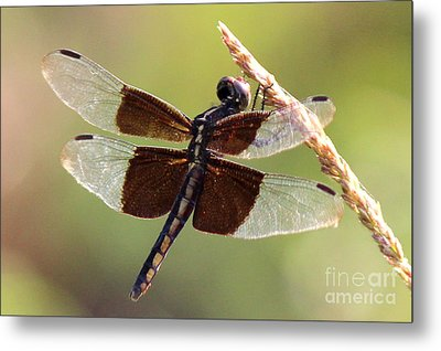Metal Print featuring the photograph Dragonfly Closeup by Kathy  White