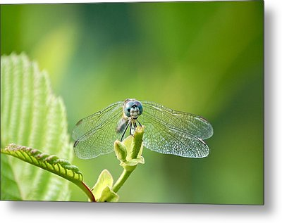 Dragonfly Face Metal Print by Mary McAvoy