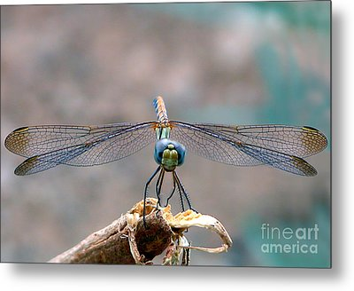Dragonfly Headshot Metal Print by Graham Taylor