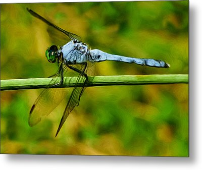Dragonfly Metal Print by Jack Zulli