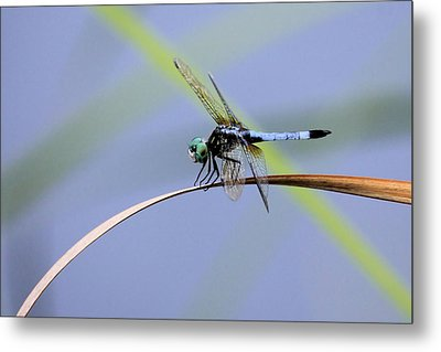 Dragonfly Metal Print by Laura Oakman