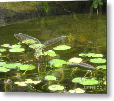 Dragonfly Metal Print by Laurianna Taylor