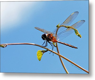 Dragonfly On A Vine Metal Print