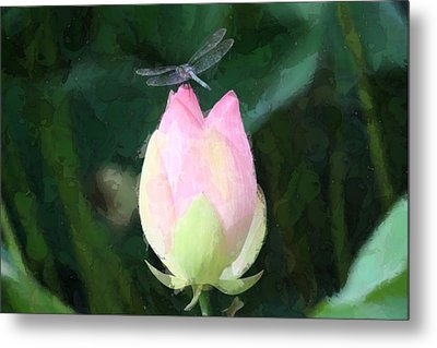 Dragonfly On Water Lily Metal Print