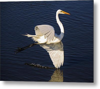 Drawing A Line In The Water Metal Print by Paulette Thomas