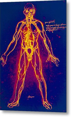 Drawing Of Human Venous System (leonardo Da Vinci) Metal Print by Mehau Kulyk