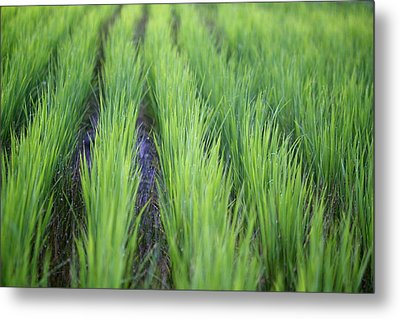 Dream Like Green Metal Print by Jasohill Photography