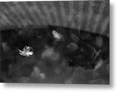 Metal Print featuring the photograph Dreamfrog by Luis Esteves