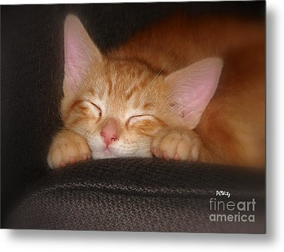 Dreaming Kitten Metal Print