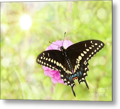 Dreamy Black Swallowtail Butterfly Metal Print