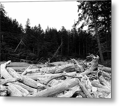 Driftwood 2 Metal Print by Tanya  Searcy